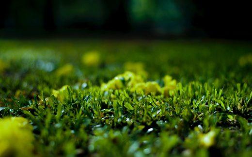 Färdigt gräs