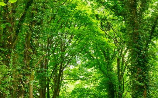 Anlita en arborist för välmående träd